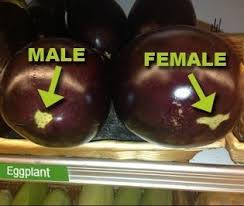 male female eggplant