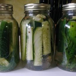 Refrigerator Dill and Garlic Pickles (No Cook Recipe)